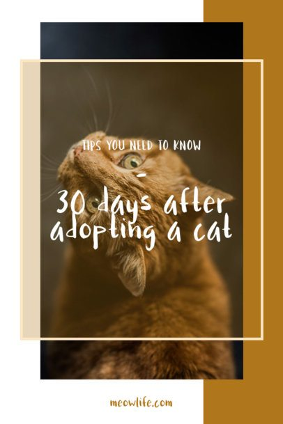 Pinterest Pin Template with Tips for Cat Owners 2150e