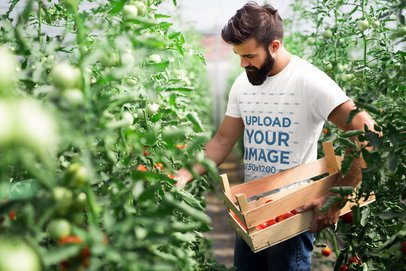 Mockup of a Man with a Basic Tee Harvesting Tomatoes 40377-rel2