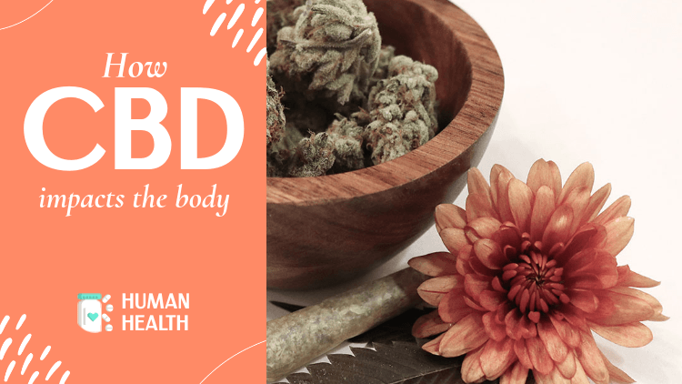 YouTube Thumbnail Template for a CBD-Themed Educational Content 3034m
